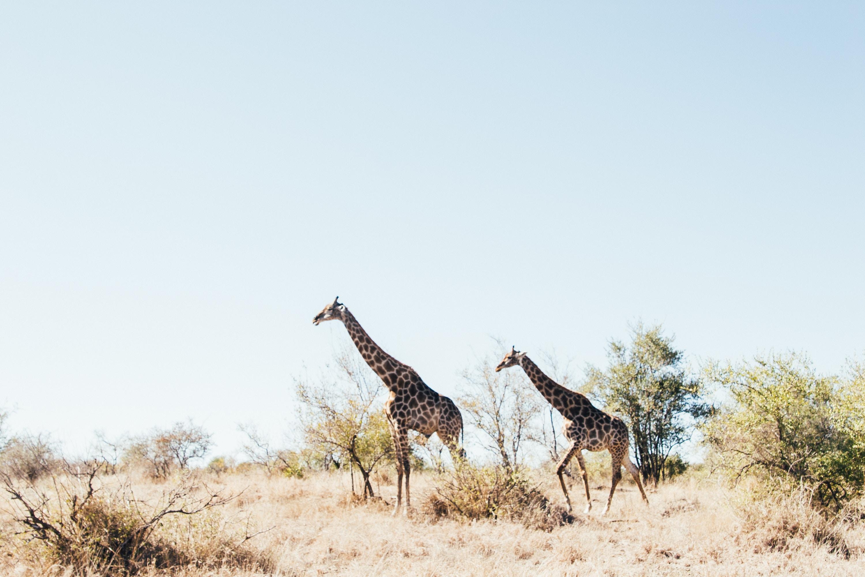 Johannesburg et le parc Kruger