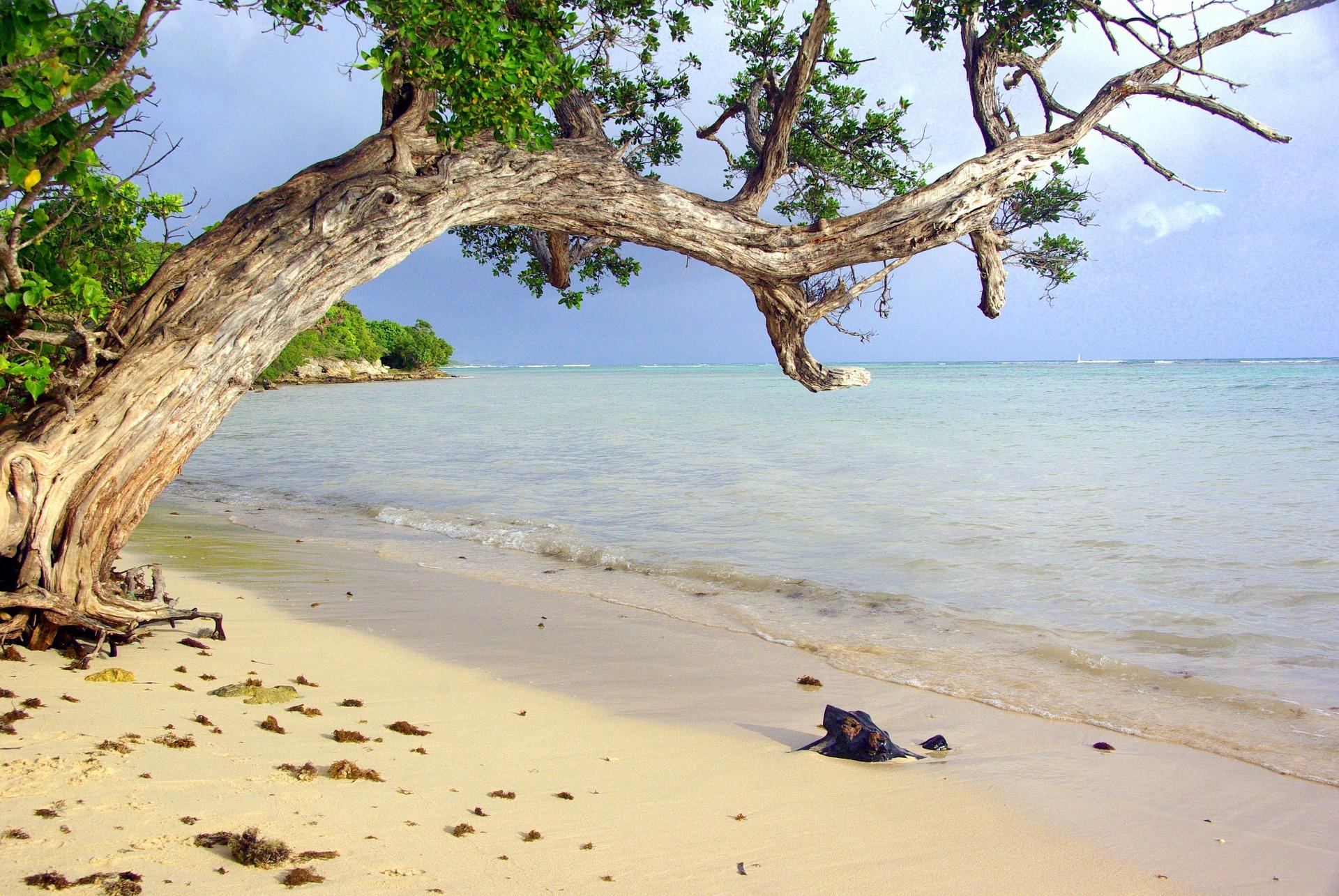 Gwadloup (Guadeloupe) au volant