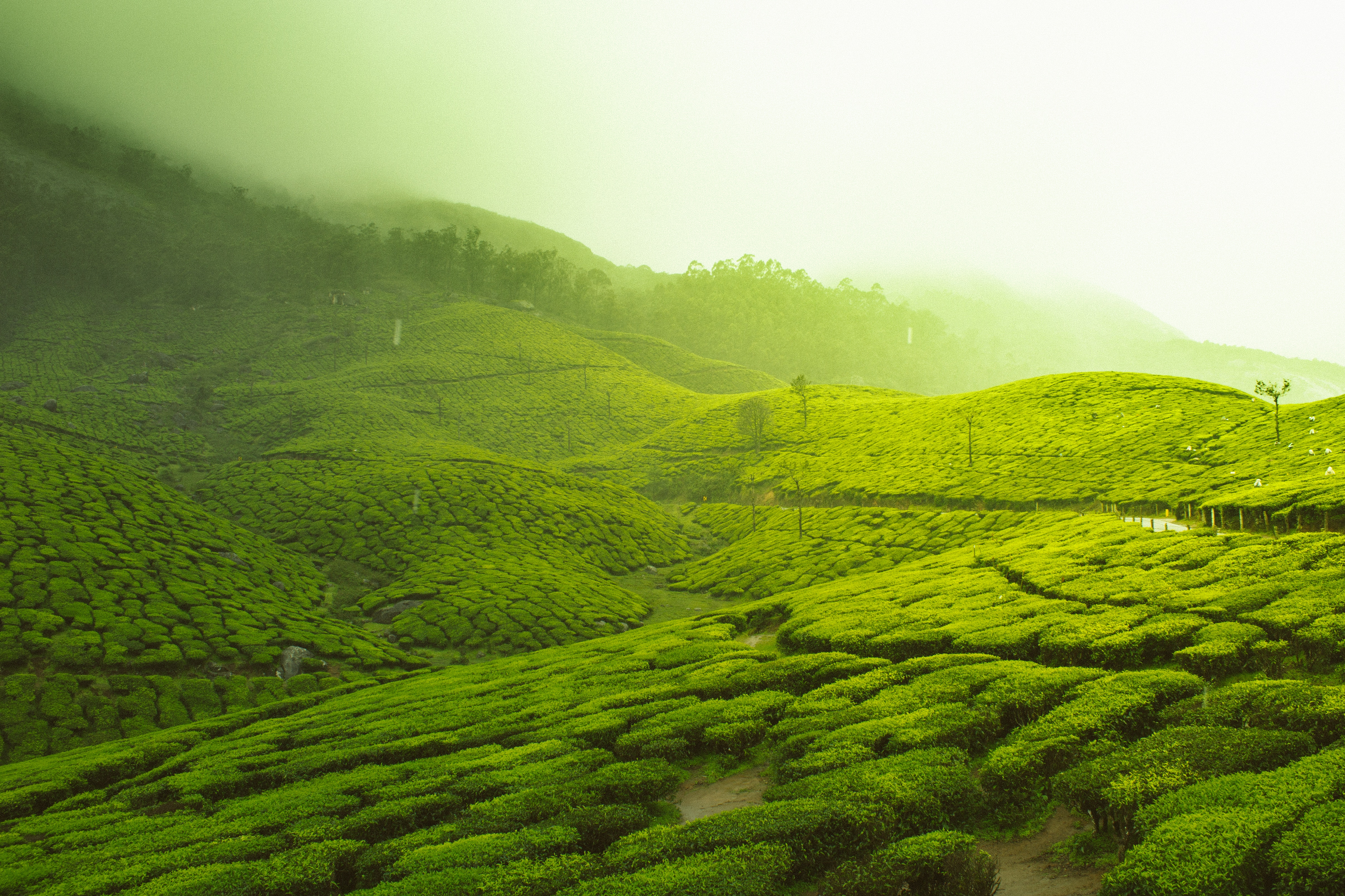 Inde : du Tamil Nadu au Kerala